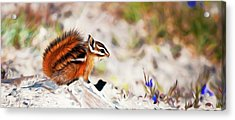 Chipper Acrylic Print by Timothy Hack