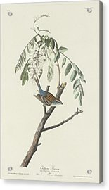 Chipping Sparrow Acrylic Print by Rob Dreyer