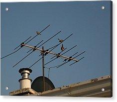Chirping Antenna Acrylic Print by Stephen Davis