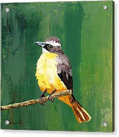 Chirping Charlie Acrylic Print by Nathan Rhoads