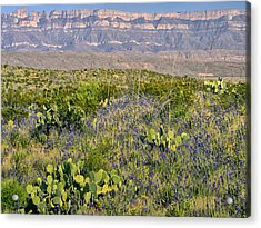 Chisos Mountains Acrylic Print