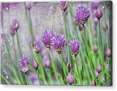 Chives In Texture Acrylic Print by Debra Baldwin