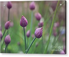 Chives Acrylic Print by Lyn Randle