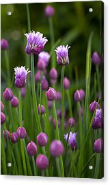 Acrylic Print featuring the photograph Chives by Patrick Downey