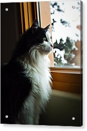 Acrylic Print featuring the photograph Chloe In Winter Window by Paul Cutright