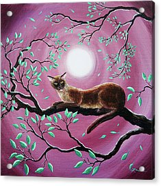 Chocolate Burmese Cat In Dancing Leaves Acrylic Print by Laura Iverson