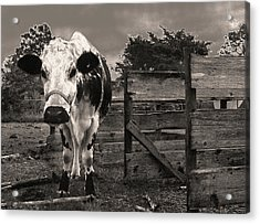 Acrylic Print featuring the photograph Chocolate Chip At The Stables by T Brian Jones