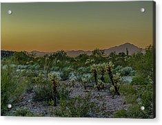Cholla Desert Sunset Acrylic Print