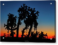 Acrylic Print featuring the photograph Cholla Silhouettes by Rick Furmanek