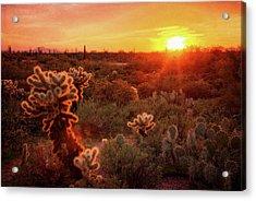 Acrylic Print featuring the photograph Cholla Sunset In The Sonoran  by Saija Lehtonen