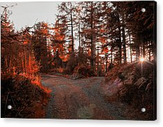 Choose The Road Less Travelled Acrylic Print