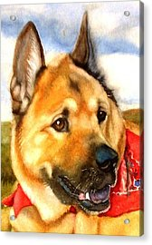 Chow Shepherd Mix Acrylic Print by Marilyn Jacobson
