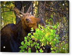 Acrylic Print featuring the photograph Chow Time by John De Bord