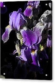 Acrylic Print featuring the photograph Chris' Garden - Purple Iris 1 by Stuart Turnbull