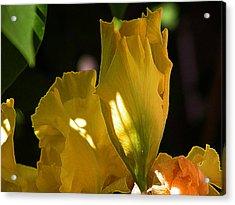 Acrylic Print featuring the digital art Yellow Iris by Stuart Turnbull