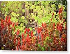 Acrylic Print featuring the photograph Christmas Cactii by David Chandler