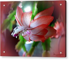Acrylic Print featuring the photograph Christmas Cactus by EricaMaxine  Price