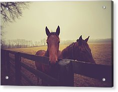 Acrylic Print featuring the photograph Christmas Horses by Shane Holsclaw