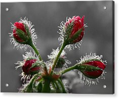 Christmas In May Acrylic Print by Lori Deiter