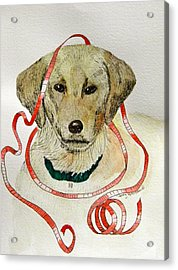 Christmas Puppy Acrylic Print by Terry Honstead