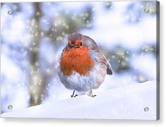 Acrylic Print featuring the photograph Christmas Robin by Scott Carruthers