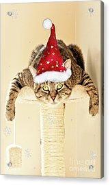 Christmas Splat Cat Acrylic Print