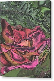 Chrome Rose 64182 Acrylic Print