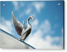 Chrome Swan Acrylic Print