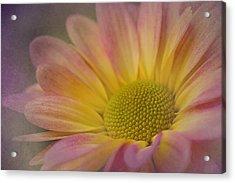 Chrysanthemum 3 Acrylic Print
