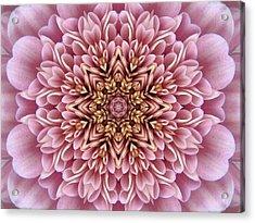 Chrysanthemum Kaleidoscope Acrylic Print