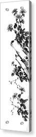 Chrysanthemum Stone 2 Acrylic Print by Chang  Lee