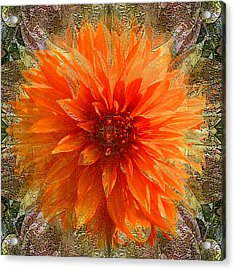 Chrysanthemum Acrylic Print by Tom Romeo