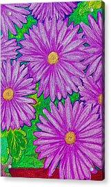 Chrysanthemums Pink Acrylic Print by Adrienne Talbot