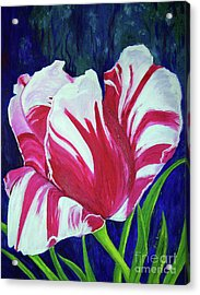 Chucks Tulip Acrylic Print