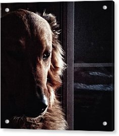 Chuvak #portrait #dogsofinstagram #dog Acrylic Print