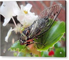 Acrylic Print featuring the photograph Cicada On Flower by Beth Akerman