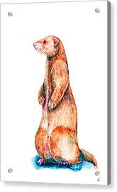 Acrylic Print featuring the painting Cinnamon Ferret by Zaira Dzhaubaeva