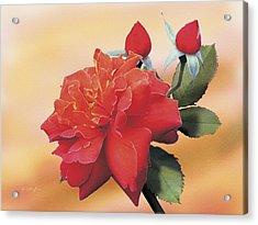 Cinnamon Roses Acrylic Print by Jan Baughman