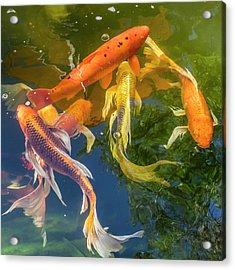 Circle Of Koi Acrylic Print