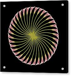 Circle Of Lily Acrylic Print by Jon Daly