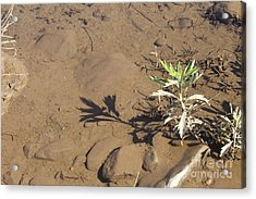 Acrylic Print featuring the photograph Circle Shadow Plant by Marie Neder