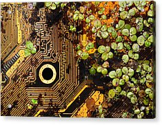Circuit Sprouts Acrylic Print