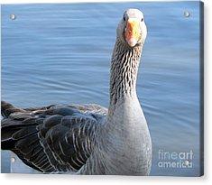 City Park Goose Acrylic Print by Elizabeth Fontaine-Barr