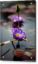 City Park Lily Pads Acrylic Print by Paul Michaels