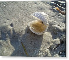 Clam Quarters Acrylic Print by Cheryl Waugh Whitney