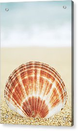 Clam Shell Acrylic Print by Brandon Tabiolo - Printscapes