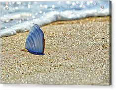 Clamshell In The Waves On Assateague Island Acrylic Print