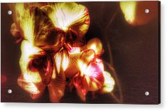 Acrylic Print featuring the photograph Clarissa by Isabella F Abbie Shores FRSA