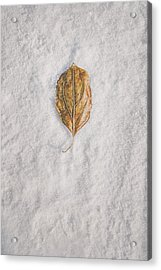 Clash Of Seasons Acrylic Print by Scott Norris