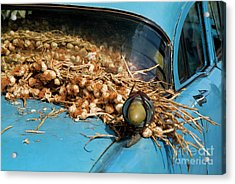 Classic American Car With Trailer Full Of Garlic Acrylic Print by Sami Sarkis
